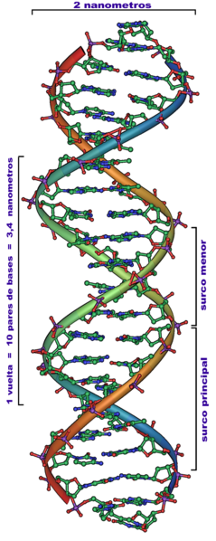239px-dna_overview_es.png